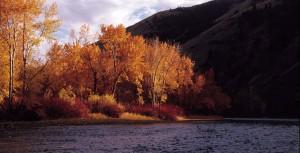 fall steelhead colors