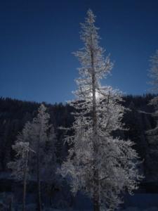 Salmon River Snowpack